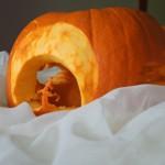 Mroczna dynia na halloween