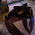 Tulipan marmurkowy - Deserek Choco-Bufet